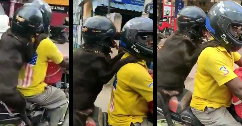 Now, dog wearing helmet takes a bike ride in Tamil Nadu | Video