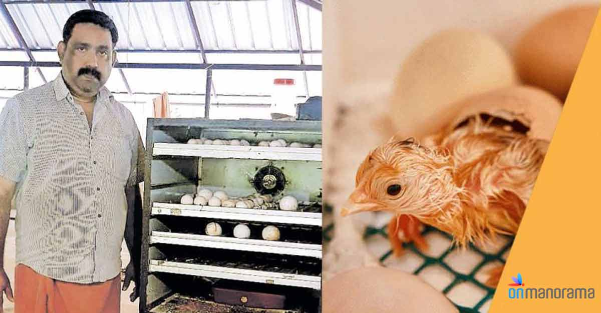With an incubator facility, Kerala's poultry farmers could do better