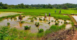 Back to farms! Lockdown and downturn spur fallow land farming in Kerala