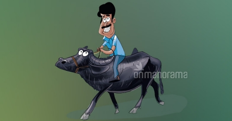 Buffaloes are the new cash cows