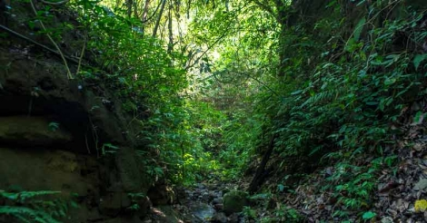 A new model for biodiversity conservation