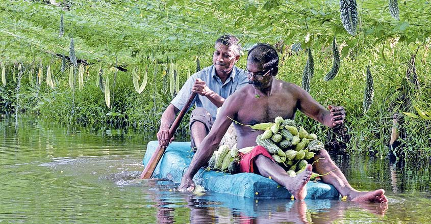 Vegetable farming in water? This Alappuzha farmer shows the way