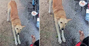 Stray dog's barks save man from likely watery grave