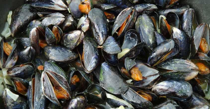 Mussels farming helps flood-hit Kerala village