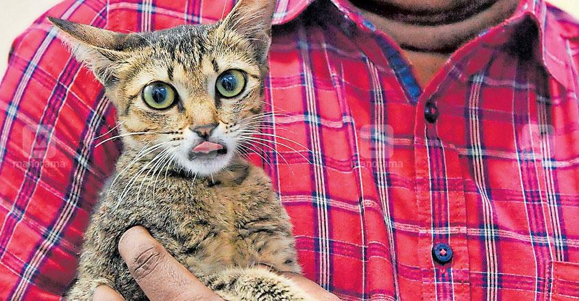 Animal lovers queue up to adopt Metro Mickey, the kitten rescued from Kochi Metro pillars