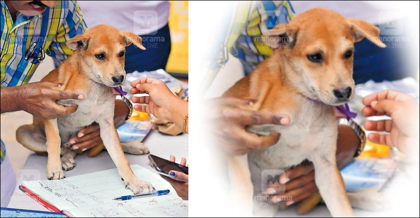 Adopt a pet, head to Kochi camp