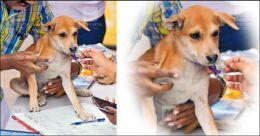 Adopt a pet, head to Kochi camp