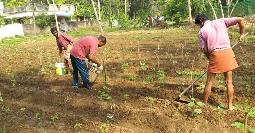 This Kerala village aims a green revolution to drive lockdown blues away