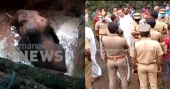 After four hours, wild elephant rescued from well in Kothamangalam