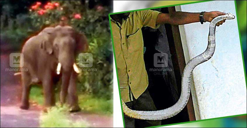 Students across Idukki brave snakes, elephants often