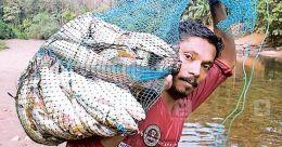 Arakkulam folks haul in 100 kg fish from Malankara dam