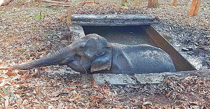 Jumbo lands in big trouble, rescued