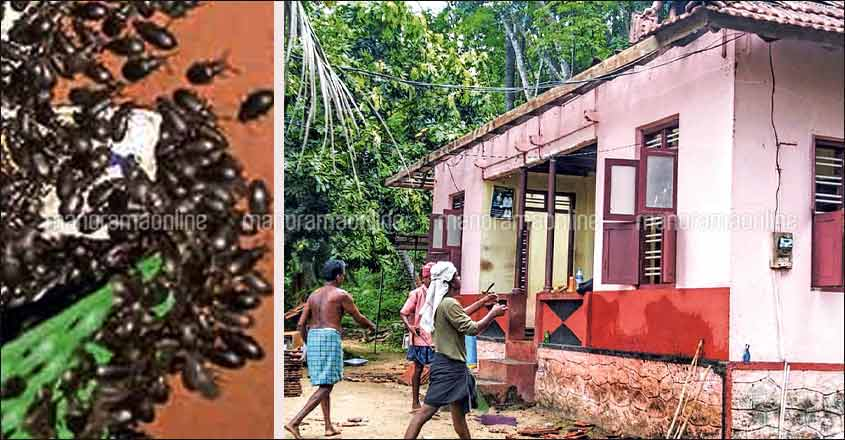 Thodupuzha family takes down roof of house to ward off beetle menace