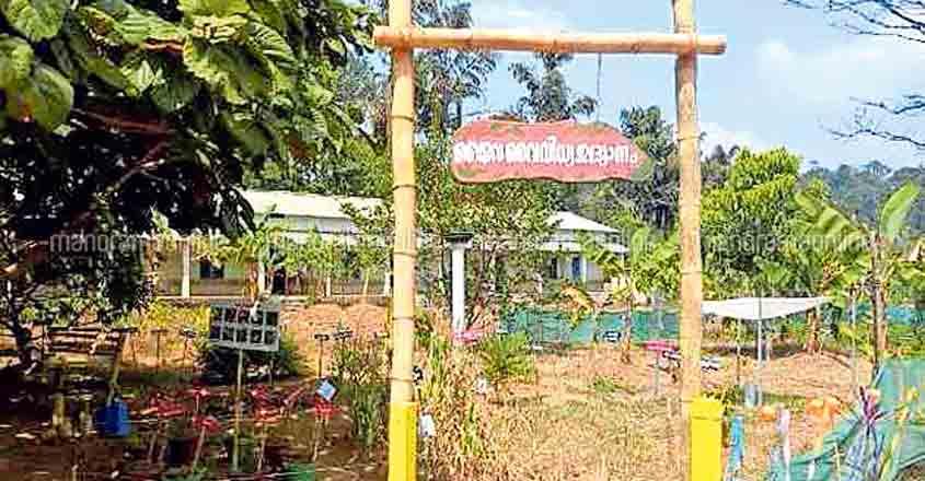 Kanjikuzhi school's lofty bonding with nature