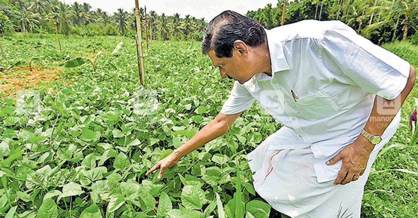 Minister MM Mani, MLA PJ Joseph busy in their farms during lockdown