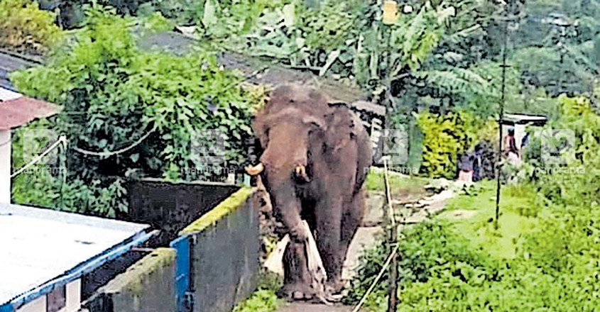 Elephant menace acute in parts of Idukki