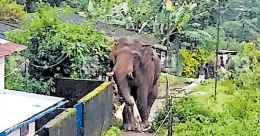 Elephant menace acute in parts of Idukki