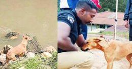 Pettimudi tragedy: Pet dog Kuvi to be part of police squad
