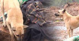 Orphaned dog becomes haunting presence at Pettimudi | Video