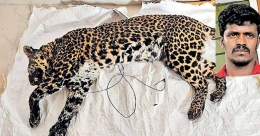 Over a year after his cow was killed, man hunts down leopard in Munnar