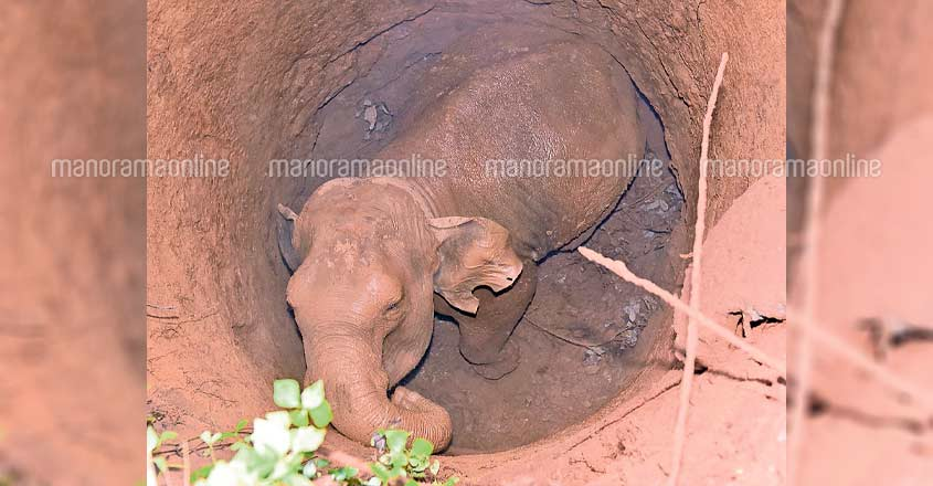 Wild elephant rescued from bore well amidst local protests