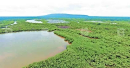 Why some buy and pool mangrove land on Kannur coast