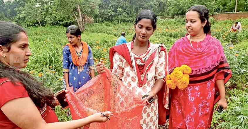 Women groups are leading the efforts to cultivate marigold flowers in Kannur ahead of Onam
