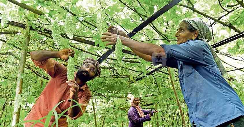 Organic farmers now keep Keezhattoor buzzing