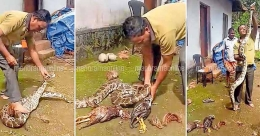 Snake catcher stamps on python, HC seeks explanation