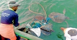 Fishermen rescue sea turtles enmeshed in plastic debris