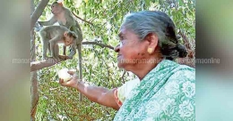This elderly woman is saviour for a monkey troop