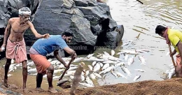 Dead fish float in Payaswini river; Collector intervenes