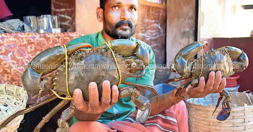 Crabs provide succour to fishermen in distress