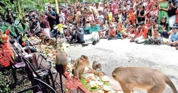 A sumptuous Onam feast for monkeys too