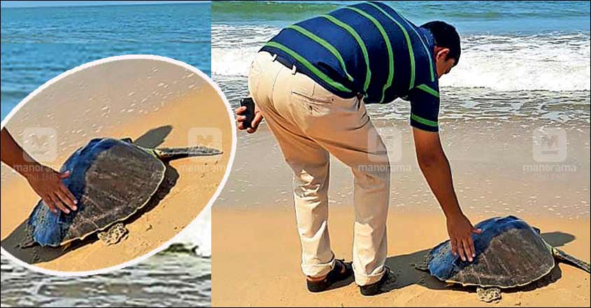 Turtle, found trapped in fishing net, released into the sea