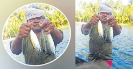 Mackerel presence in Ashtamudi points to saltwater incursion