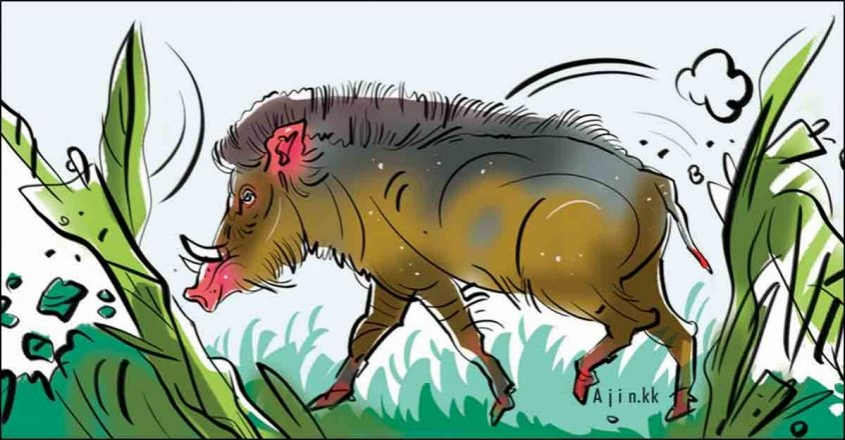 Wanted! Wild boar hunters; Why few respond to Forest Dept notice
