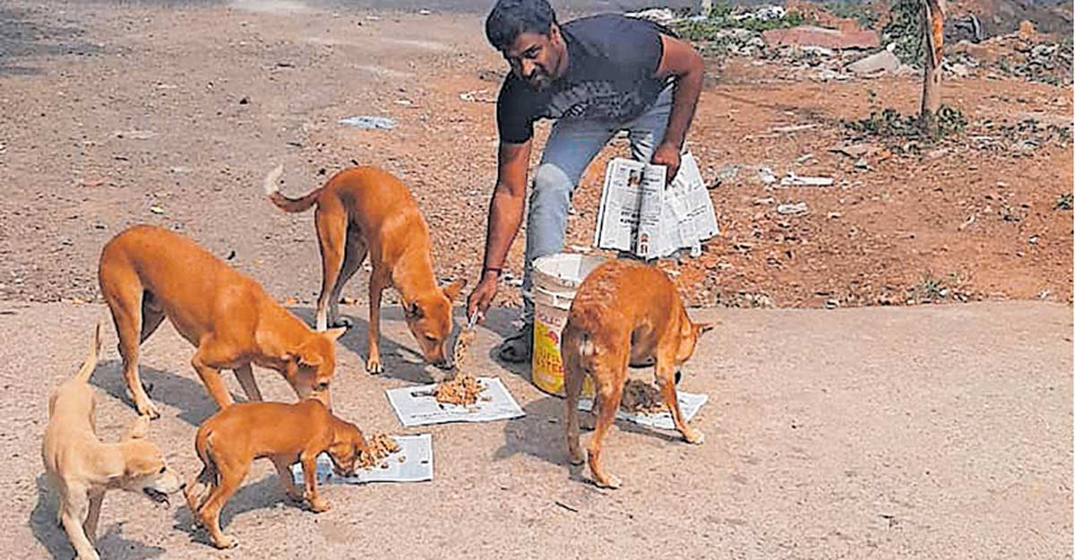 Youth saves around 120 street dogs from hunger during lockdown