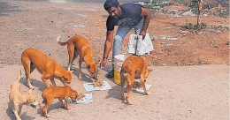 Kollam youth saves around 120 street dogs from hunger during lockdown