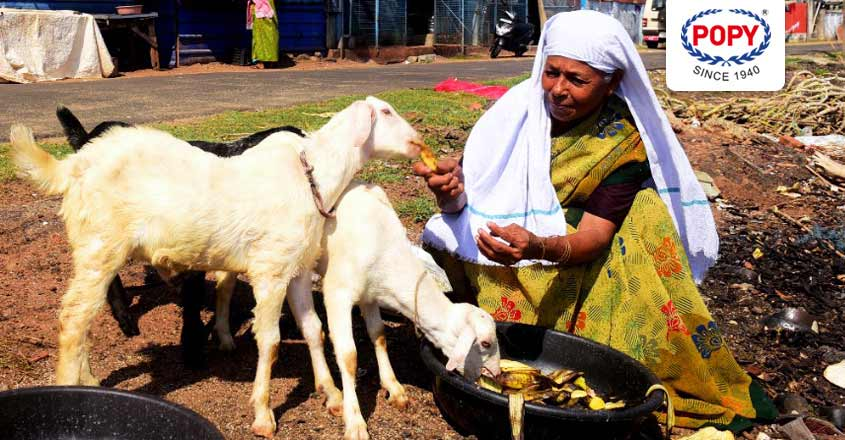Kollam woman sells off goats to make a contribution to CM's disaster relief fund