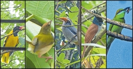 Near-threatened species of birds return to Kollam neighbourhood amid COVID-19 lockdown