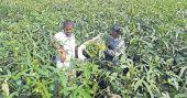Kerala expat reaps profits from farming on return to homeland