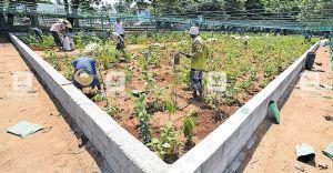 Kollam ashram prepares ground for Miyawaki forest