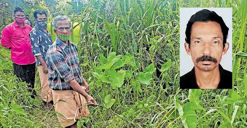 Kottayam dairy farmer electrocuted 3 months after electric line snaps from post
