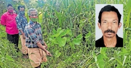 Kottayam dairy farmer dies of electrocution 3 months after electric line snaps from post