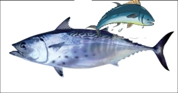 Good news for Kottayam: Chemical-free, fresh fish to be available at your doorstep