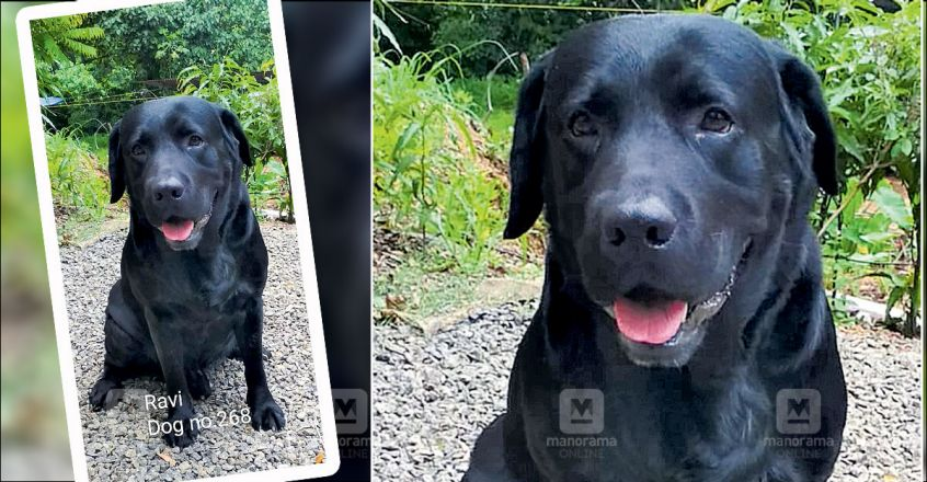 Police dog traces 40-year-old a day after he went missing