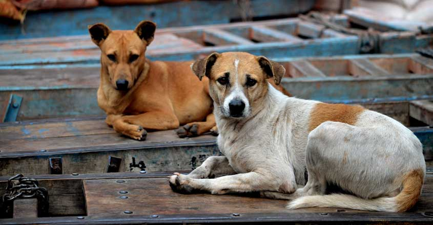 Blood bank for dogs to open soon - a first in Kerala