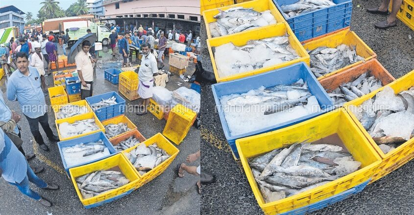 Is there anything fishy about frozen fish sold in Kozhikode?