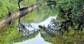 Lockdown clears Canoli canal, water now is crystal clear